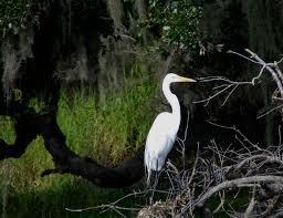 Braden Woods Neighborhoods Keep Old Florida Charm